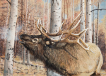 """Aspen Morning is anoriginal oil painting. 24""""w x 18""""h It's a cool crisp morning and the large bull elk is bugling and searching the aspen forest for a companion"""