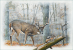 The Snitch/Oil Painting/The buck is wanting to avoid the sleeping hunter but the tiny chipmunk could spoil everything.